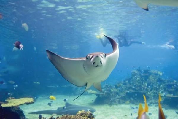 صور - اخطر 10 مخلوقات بحرية فى العالم بالصور