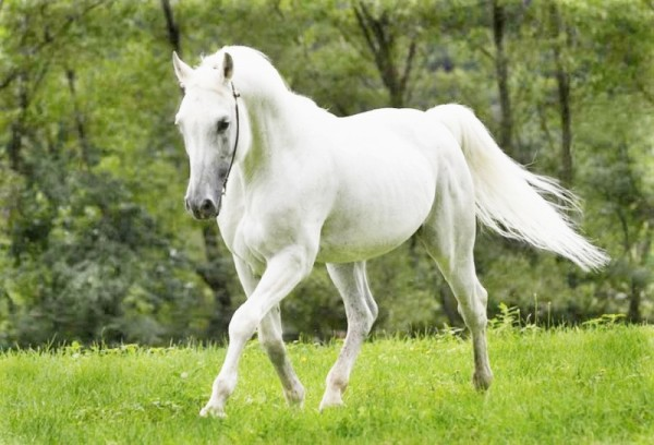معلومات رائعة عن الحصان بالصور نورليك