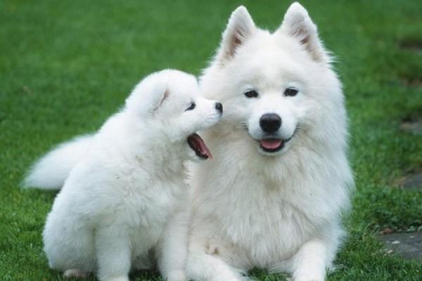 صور - 10 اغلى كلاب فى العالم بالصور