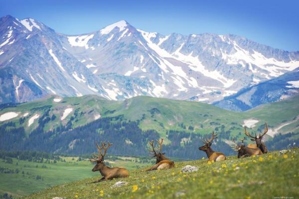 التنوع البيولوجى فى جبال روكي