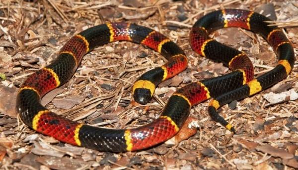 الثعابين من ذوات الدم البارد
